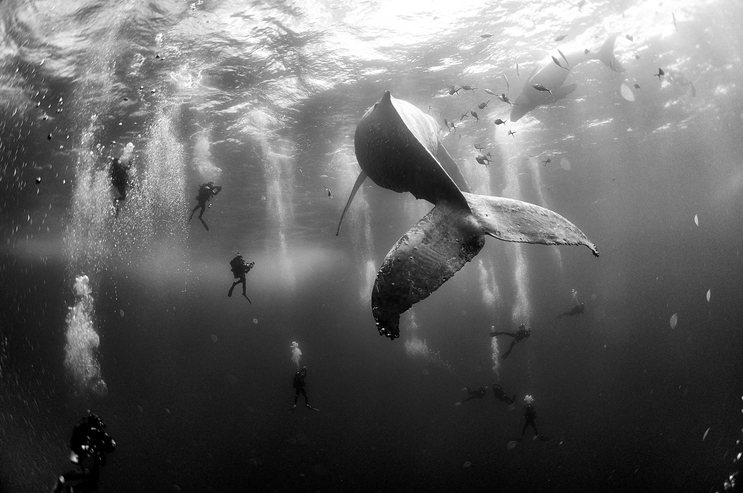 2016-dunya-basin-fotograflari-yarismasi-kazananlari-artmanik-6